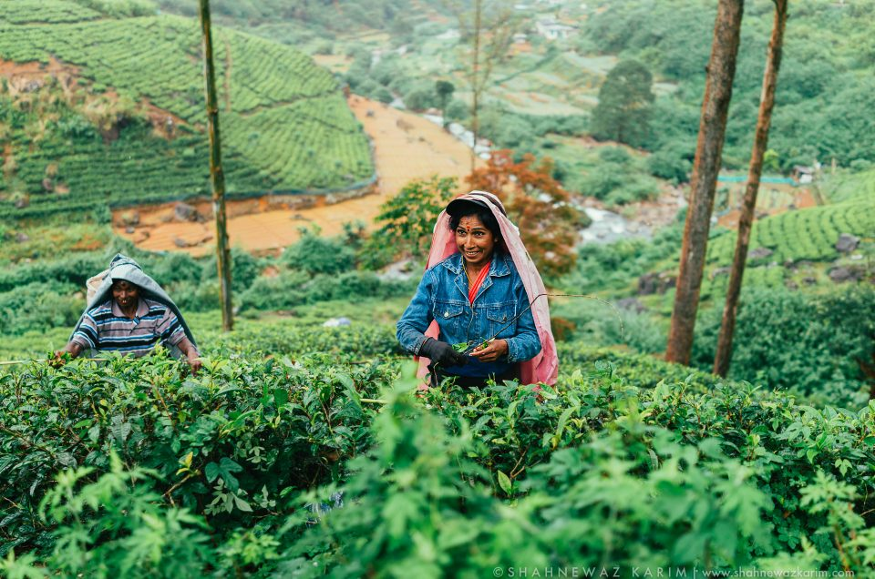 Tea ladies of Nuware Eliya